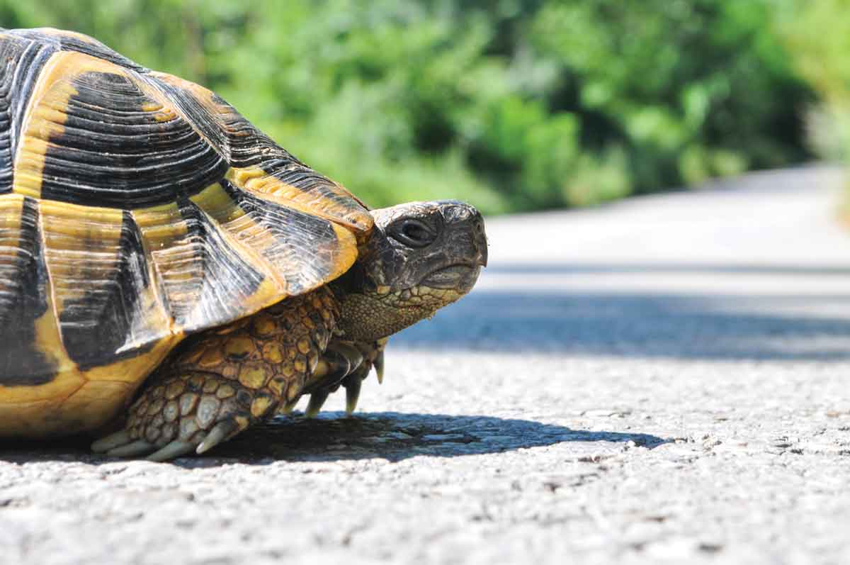 5 Common Causes of a Slow WordPress Site – What to Know